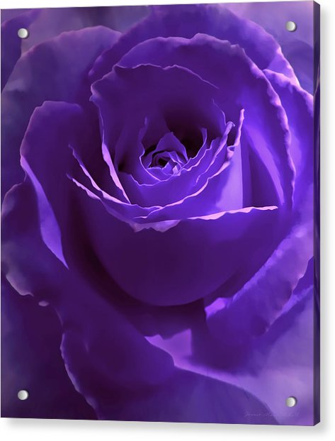 Dark Secrets Purple Rose Acrylic Print