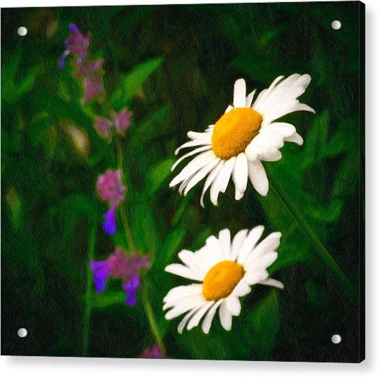 Acrylic Print featuring the photograph Dear Daisy by Garvin Hunter