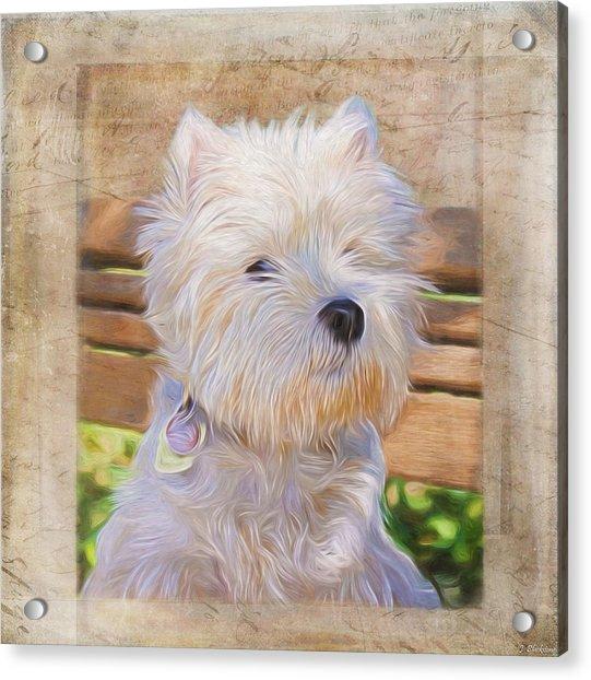 Dog Art - Just One Look Acrylic Print