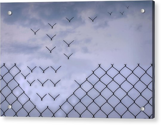 Dona??t Fence Me In! Acrylic Print by Bjorn Emanuelson
