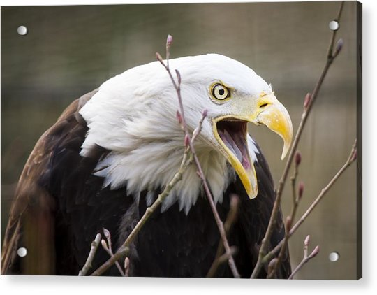 Don't Mess With This One Acrylic Print