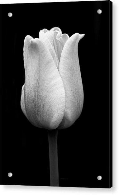 Dramatic Tulip Flower Black And White Acrylic Print