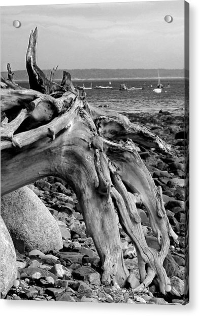 Acrylic Print featuring the photograph Driftwood On Rocky Beach by Jemmy Archer