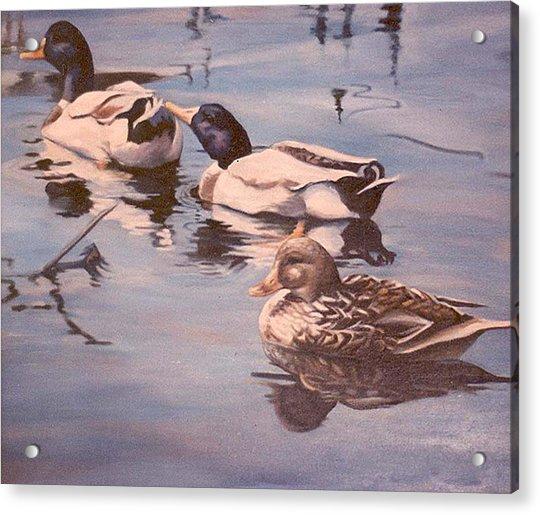 Ducks On The Cachuma Acrylic Print