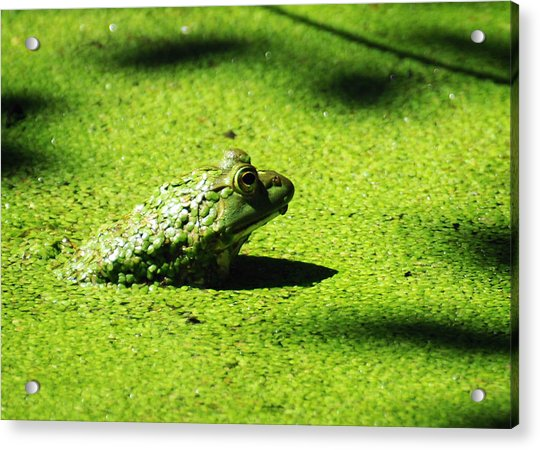 Easy Being Green Acrylic Print