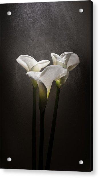 Elegance Acrylic Print by Ivan Vukelic