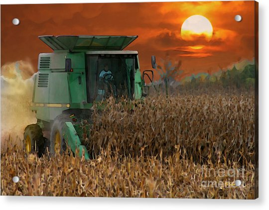Evening Harvest Acrylic Print
