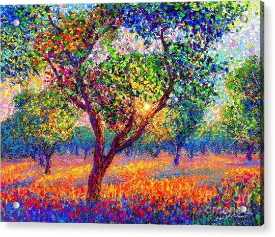 Evening Poppies Acrylic Print