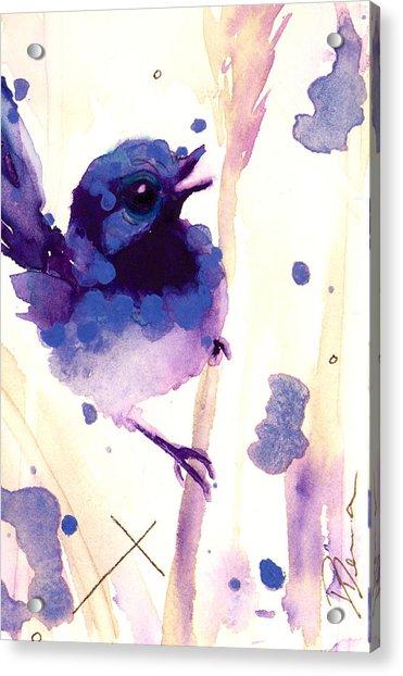 Fairy-wren Acrylic Print