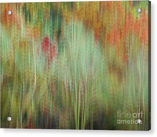 Fall Color Abstract 2 Acrylic Print