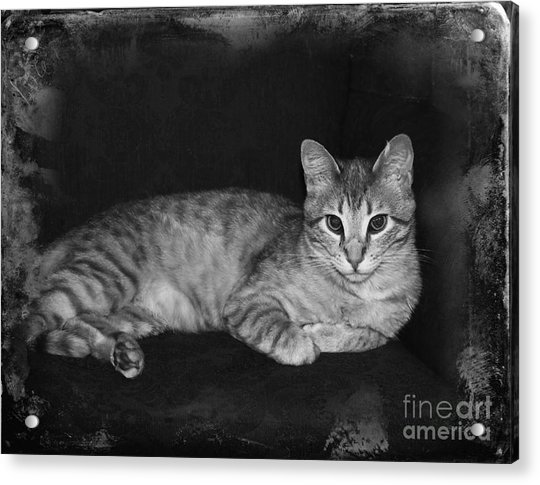 Feral Cat Day Acrylic Print