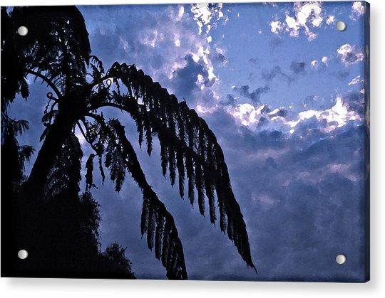 Fern At Twilight Acrylic Print
