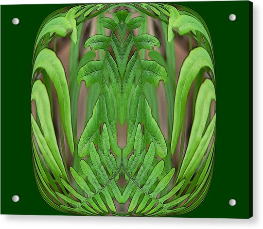 Fern Brain Acrylic Print
