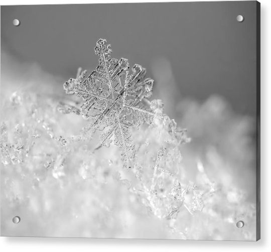 Acrylic Print featuring the photograph First Snowflake by Rona Black