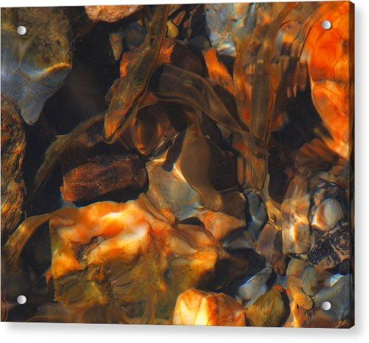 Fish 1 Acrylic Print