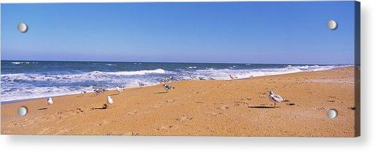 Flock Of Birds On The Beach, Flagler Acrylic Print