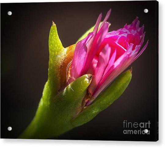 Floral Glove Acrylic Print