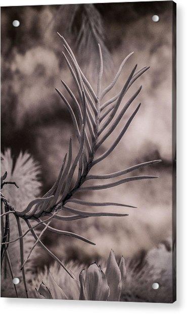Florida Flora 1 Acrylic Print