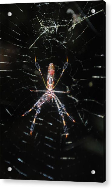 Insect Me Closely Acrylic Print
