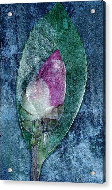 Flower Bud Acrylic Print