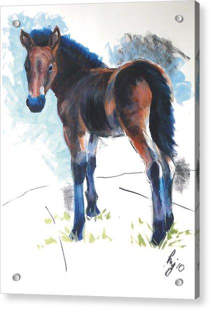 Foal Painting Acrylic Print