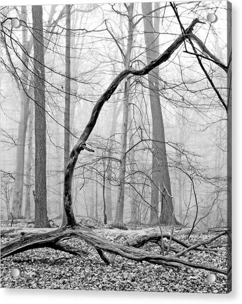 Foggy Morning Deciduous Forest Acrylic Print