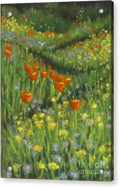 Poppy Trail Acrylic Print