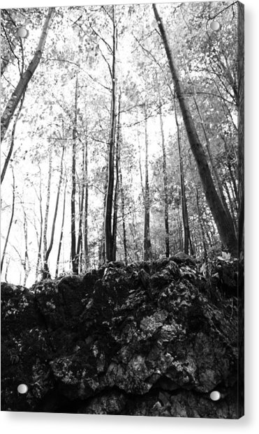 Forest Black And White 7 Acrylic Print by Falko Follert