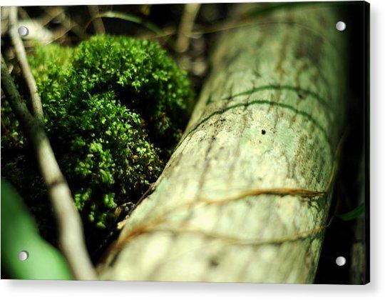 Forest Love Acrylic Print