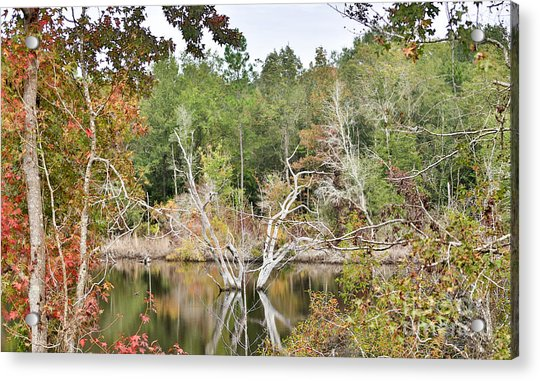 Forest Reflection Acrylic Print by Mina Isaac