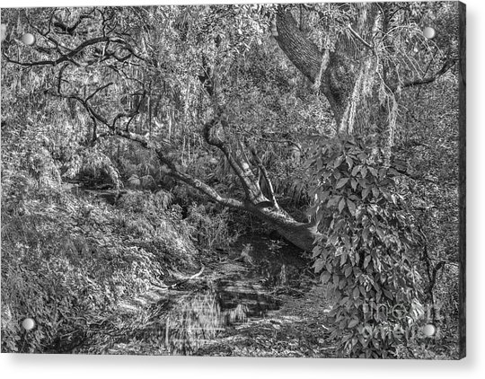 Forest View Acrylic Print by Mina Isaac