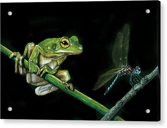 Frog And Dragonfly Acrylic Print