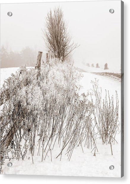 Frozen Fog On A Hedgerow - Bw Acrylic Print