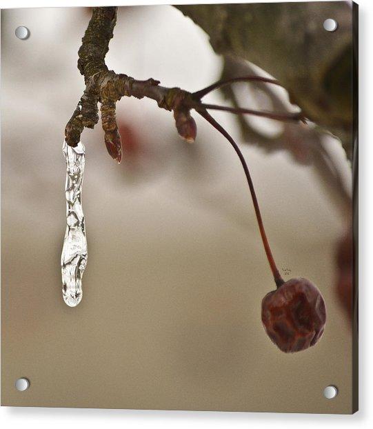 Frozen Spring Acrylic Print