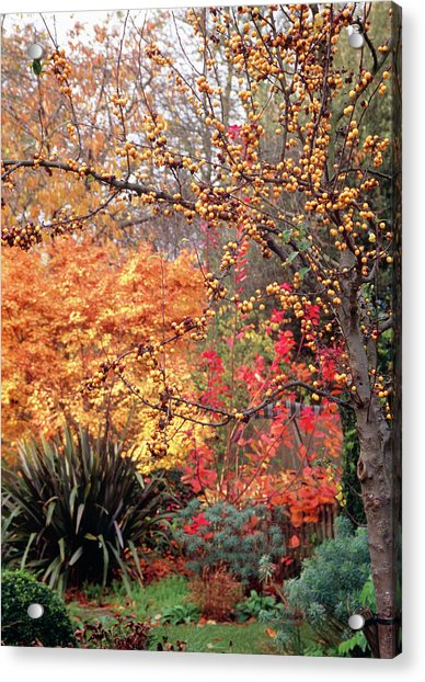Garden In Autumn Acrylic Print