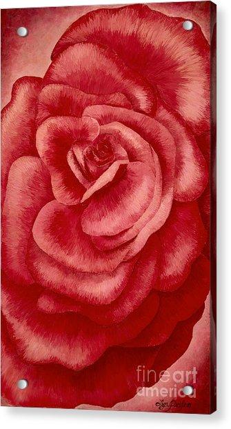 Garden Rose Acrylic Print