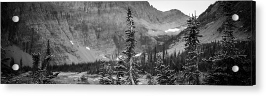 Gnarled Pines Acrylic Print