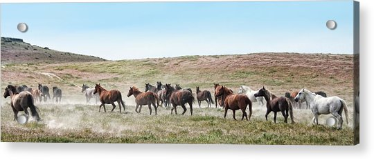Going To Higher Ground Acrylic Print by Gene Praag