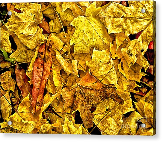 Golden Colors Of Fall Acrylic Print
