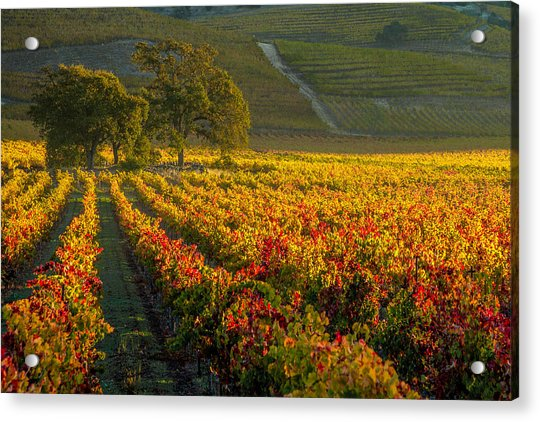 Golden Light In The Valley Acrylic Print