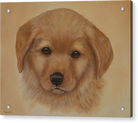 Golden Puppy Acrylic Print