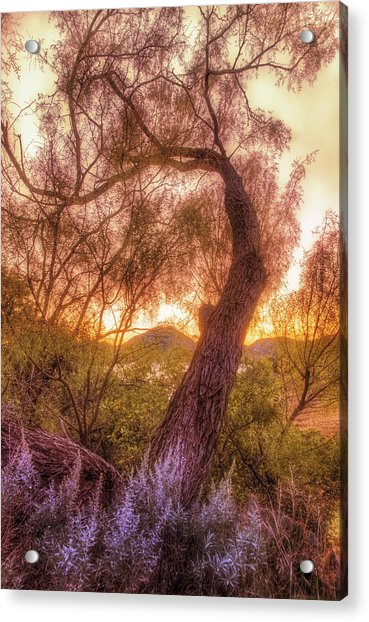 Acrylic Print featuring the photograph Golden Tree At The Quartz Mountains - Oklahoma by Jason Politte