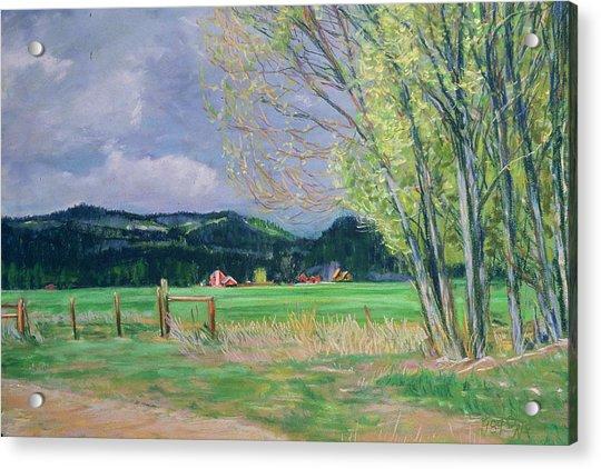 Golden Willows - Spring Acrylic Print