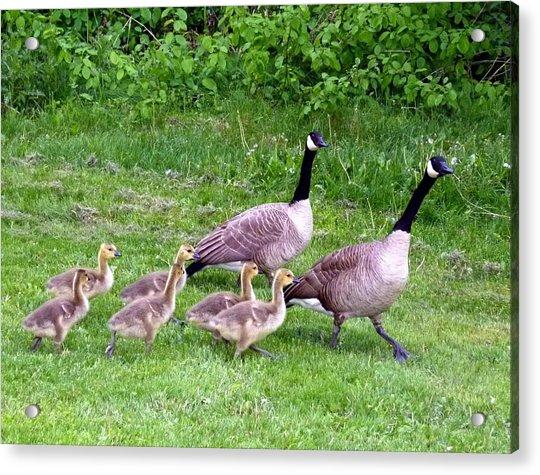 Goose Step Acrylic Print