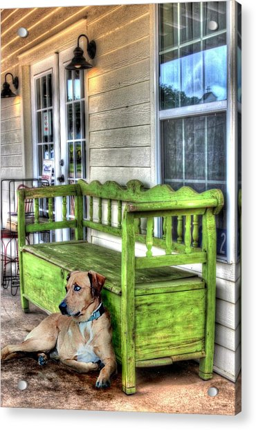 Green Bench And Catahoula Dog Photograph By Delilah Downs