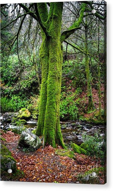 Green Green Moss Acrylic Print
