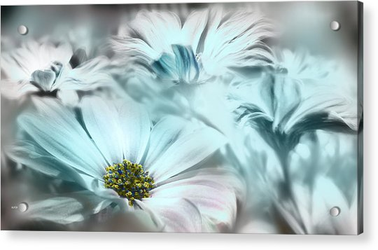 Grises De Primavera Acrylic Print
