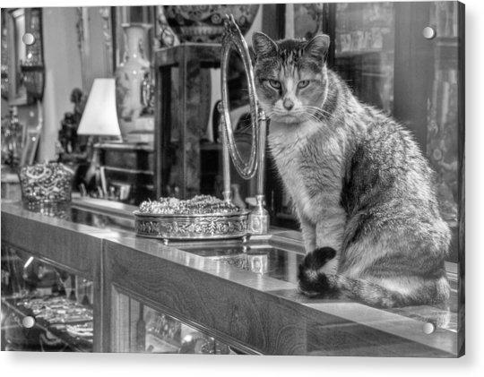 Guard Cat Acrylic Print