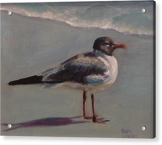 Haha Gull Acrylic Print by Karen Langley