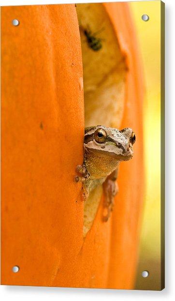 Halloween Surprise  Acrylic Print